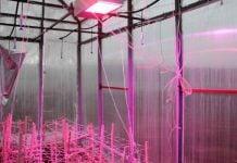Yapay Güneş Işığı (LED) Projesi